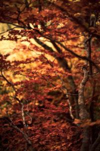 Végétation d'automne - Vallée de Chaudefour